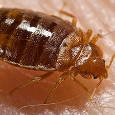 Find Bed Bug pest control in Carlisle PA and get a free bed bug extermination quote.