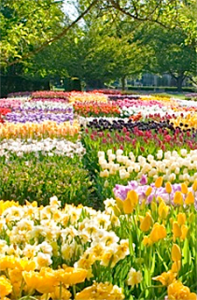 Seasonal Tips - Spring