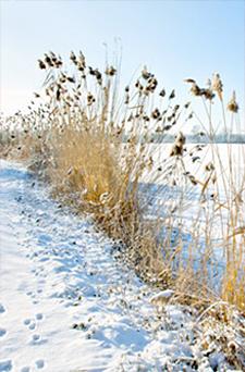 Seasonal Tips - Winter